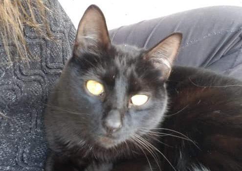 Black stray cat I found at my house.